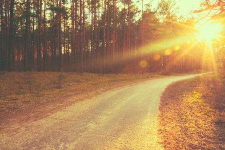 Лейн проходит через осенью лиственного леса на рассвете или восхода солнца.