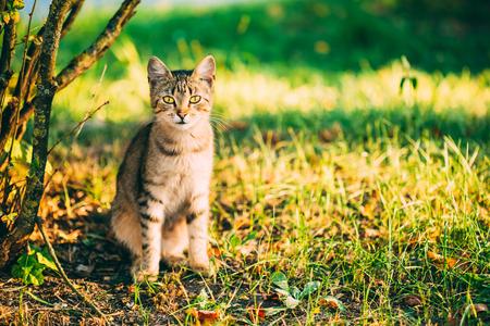 Cute Tabby Gray Cat Kitten Pussycat Sitting In Grass Outdoor In Sunny Summer Evening photo