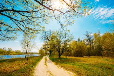 Spring Time In Countryside. Green Young Grass, Trees On Blue Sky Background
