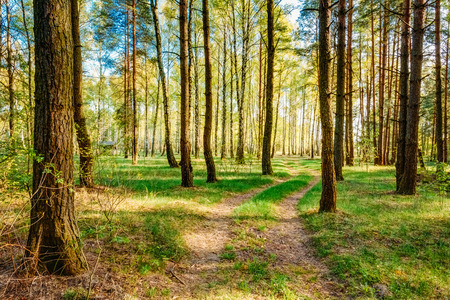 road and path through: Path Road Way Pathway With Trees On Sunny Day In Summer Forest. Sunbeams Pour Through Trees. Russian Nature Stock Photo