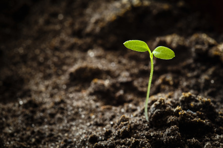 씨앗에서 성장하는 녹색 새싹. 봄 기호, 새 생명의 개념 스톡 콘텐츠
