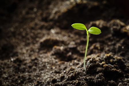 Groene spruit groeien uit zaad. Spring symbool, concept van nieuw leven Stockfoto - 34622396