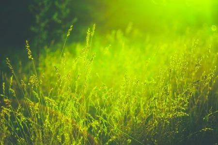 Green Grass Zomer Weide close-up met fel zonlicht. Zonnige lente Achtergrond Stockfoto