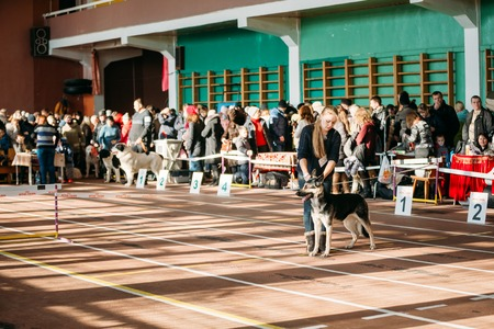 important event: GOMEL, BELARUS - FEBRUARY 1, 2015: People and dogs visit Palace athletics exhibition  -International dog show, important event dedicated to dogs and their owners.