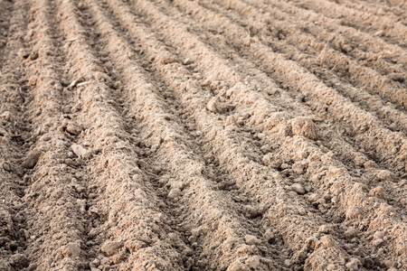 the ploughed field: Background of newly plowed field ready for new crops. Ploughed field in autumn. Farm, agricultural background