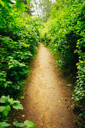 Walkway Lane Path With Green Trees And Bushes In Garden. Beautiful Alley In Park