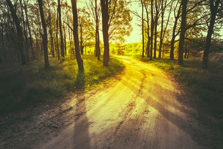 road and path through: Beautiful Green Forest In Summer. Countryside Road, Path, Way, Lane, Pathway On Sunny Day In Spring Forest. Sunbeams Pour Through Trees. Russian Nature