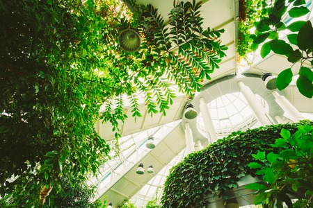 ceiling: Ceiling Greenhouse With Flowers. Temperate House Conservatory, Botanical Gardens.