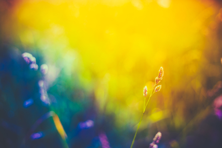 Summer Grass Meadow Close-Up With Bright Sunlight. Sunny Spring Background. Yellow, Blue And Purple Colors Toned Instant Filtered Image