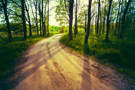 paisaje rural: Hermoso bosque verde en verano. Campo Road, Camino, Camino, Carril, Camino A Sunny Day In Spring Forest. Rayos de sol a través de árboles Pour. Naturaleza de Rusia. Imagen virada instantánea filtrada fotos