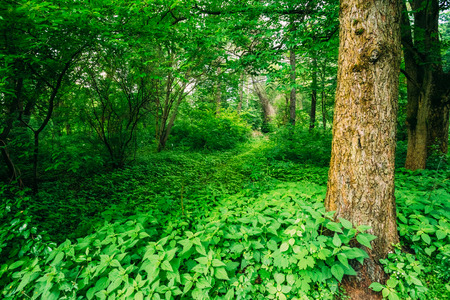 deciduous forest: Green Trees In Deciduous Forest. Beautiful Summer In Park. Russian Nature Stock Photo