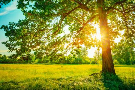 imagen: Soleado Verano �rboles forestales y la hierba verde. Naturaleza Fondo de madera luz del sol. Instant�nea Imagen virada Foto de archivo