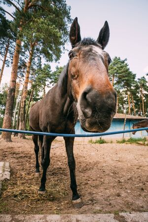 wide angle lens: Funny Brown Horse Photographed A Wide Angle Lens
