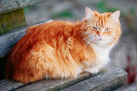 赤オレンジと白猫公園で古い木製のベンチに座って