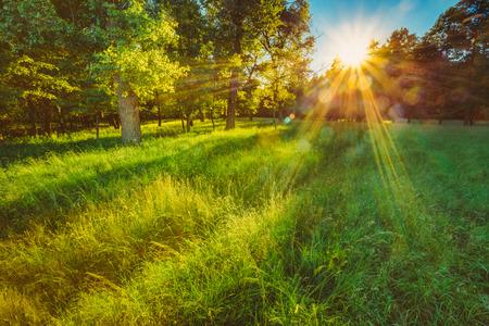 naturaleza: La luz del sol En Verde Bosque de Coníferas, Verano Naturaleza Foto de archivo