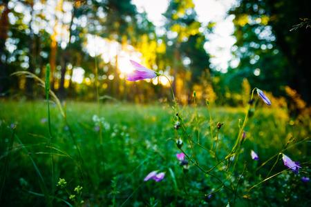 Wild Forest Flower, Sunlight In Forest, Summer Nature. Stock Photo