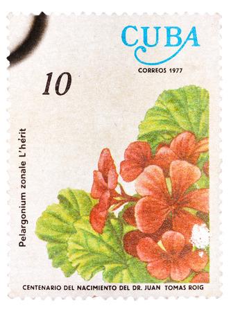 mailmen: CUBA - CIRCA 1977: A stamp printed in Cuba, flower shows Pelargonium zonale, circa 1977