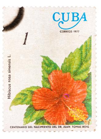 mailmen: CUBA - CIRCA 1977: A stamp printed in Cuba shows the flower Hibiscus rosa-sinensis, circa 1977