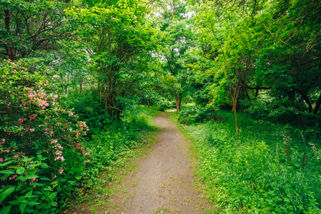 Walkway Lane Path With Green Trees in Forest. Beautiful Alley In Park. Pathway Way Through Dark Forest Stock Photo