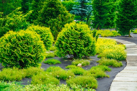 garden landscaping: Stone Pathway Walkway Lane Path With Small Green Trees And Cuted Bushes In Garden. Beautiful Alley In Summer Park. Landscaping. Garden Design