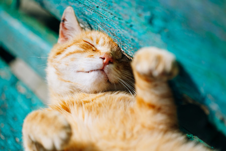 Red kitten cat sleeps on a bench in park in hot summer day