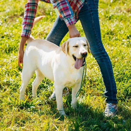 herrin: Wei� Labrador Retriever Hund stehend auf gr�nem Gras ist am Fu� der Herrin Lizenzfreie Bilder