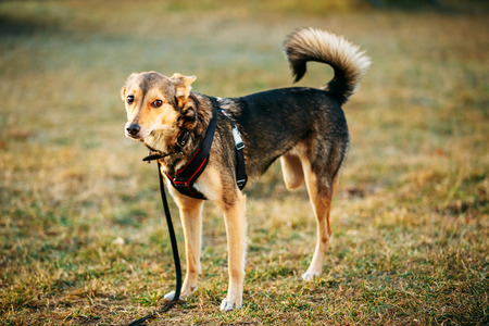 medium size: Mixed Breed Medium Size Three Legged Dog Standing At An Angle Looking Off To Side Of Camera. Autumn Time Outdoor Dog Portrait With Only Three Legs