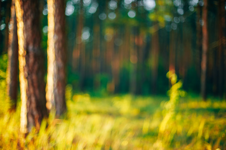 absract: Nature Green Natural Blurred Background Of Out Of Focus Forest. Bokeh, Boke Woods With Sunlight Colors Absract Background Stock Photo