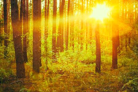 Autumn Forest under sunset Sunbeams. Automne forêt de feuillus à l'aube ou Sunrise. Woods en plein soleil Couleurs. Virage photo instantanée