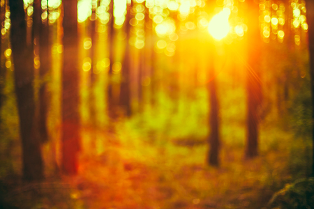 boke: Autumn Nature Green and Yellow Colors Natural Blurred Forest Background. Bokeh, Boke Woods With Sunlight Colors Absract Background