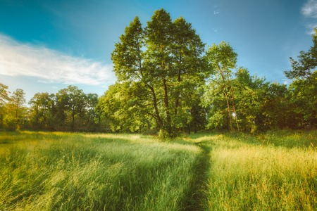 Summer Sunny Forest Trees, Green Grass, Lane, Path, Pathway. Nature Wood Sunlight Background. Instant Toned Image