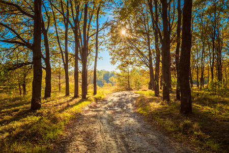road and path through: Countryside Path Road Way Pathway Through Sunny Autumn Forest Trees Woods.