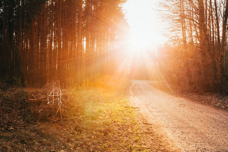Sun shining over road, path, walkway through forest. Sunset Sunrise In Autumn Coniferous Forest Trees