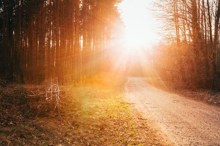 Zon schijnt over de weg, weg, wandelpad door het bos. Zonsondergang Zonsopgang In De Herfst NaaldBos Trees