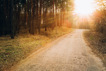 road and path through: Sun shining over road, path, walkway through forest. Sunset Sunrise In Autumn Coniferous Forest Trees