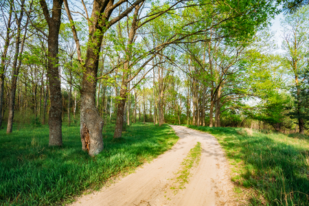 spring season: Beautiful Green Forest In Spring Season. Countryside Road, Path, Way, Lane, Pathway On Sunny Day