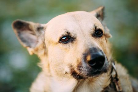 medium size: Funny Mixed Breed Medium Size Brown Dog Close Up Stock Photo