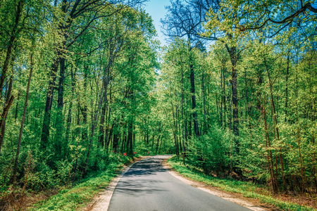 forest park: Good Asphalt Forest Road In Sunny Summer Day. Lane Running Through Spring Deciduous Forest