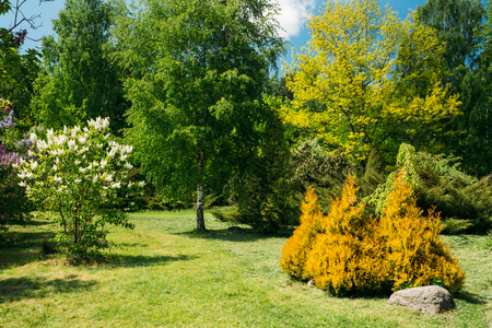 Green Trees And Bushes In Garden. Garden design, landscaping Stock Photo