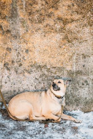 medium size: Mixed Breed Medium Size Brown Dog Sits Outdoor