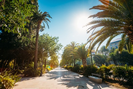paseo: Sidewalk on the Paseo del Parque in Malaga, Spain.