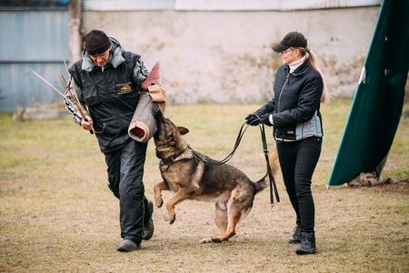 Gomel, BIELORUSSIA - 12 dicembre 2015: tedesca addestramento del cane pastore sport Gomel regionale club e decorative cane-allevamento. Bitting cane. Archivio Fotografico - 49300146