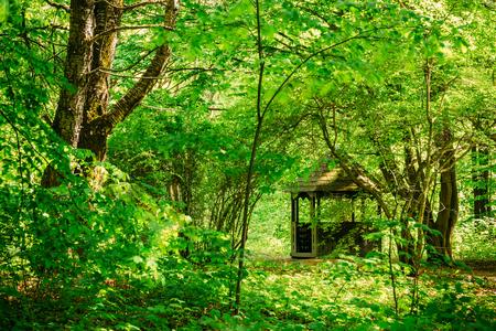Old wooden gazebo in green spring summer garden park forest. Garden pergola with forest in background. Stock Photo