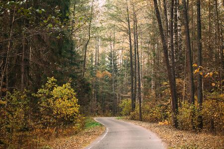 road and path through: Winding road path walkway through autumn forest.