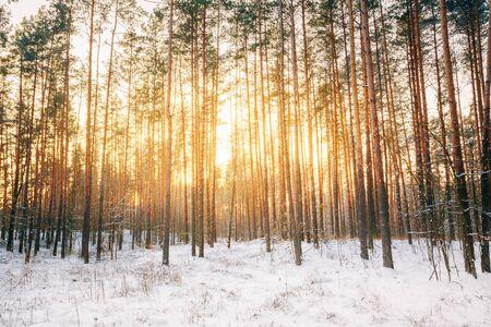 winter sunrise: Sunset sunrise in beautiful winter snowy forest.