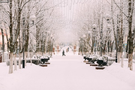 snowcovered: Snow-covered trees on city street. Snowy winter day.