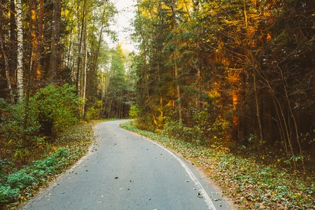 Winding asphalt road path walkway through autumn forest. Sunset sunrise time. Instant toned filtered photo effect. Nobody. Stock Photo