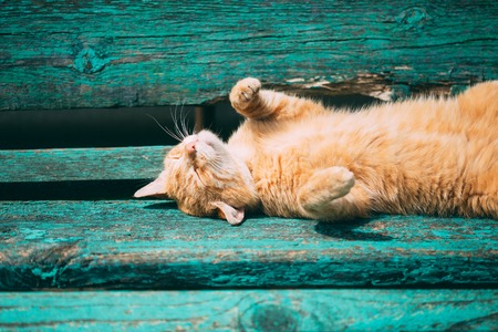 Funny Red Kitten Cat Sleeping On A Bench In Park In Hot Summer Day