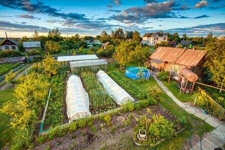 Vegetables Growing In Raised Beds In Vegetable Garden. Summer Season