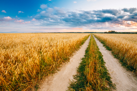 Rural Countryside Road Through Wheat Field. Yellow Barley Field In Summer. Agricultural Season, Harvest Time. Stock Photo